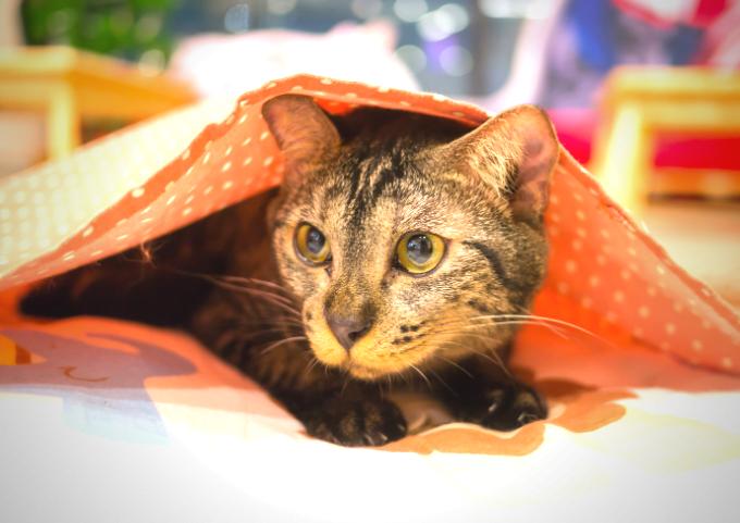cat mischief blanket